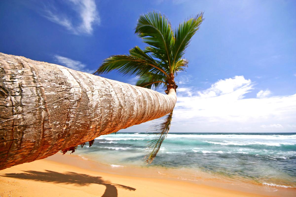 Бухта велигама, шри-ланка. карта, отзывы, пляж, погода, достопримечательности, экскурсии.  отели рядом, фото, видео, как добраться — туристер.ру